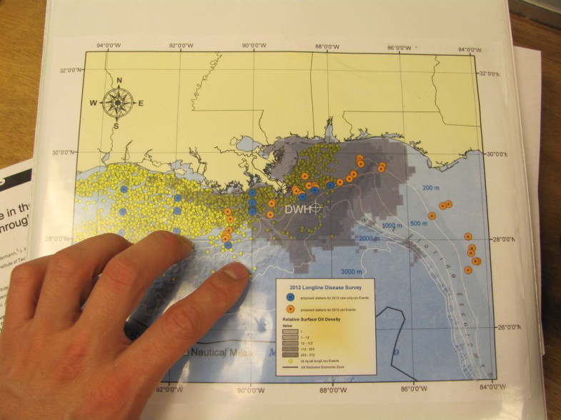 This map shows thousands of oil platforms (represented by yellow dots) scattered throughout the Louisiana and Mississippi Coast in the Gulf of Mexico. White crosshairs mark the site of the Deepwater Horizon disaster, and blue and orange circles represent C-IMAGE sampling sites. (Photo: David Levin)