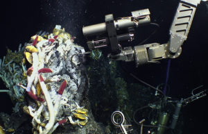 "The manipulator arm on the deep-sea vehicle Jason holds a samplng instrument above a community of tubeworms at a hydrothermal vent site called ""Crab Spa"" on the East Pacific Rise. The device, called an Isobaric Gas-Tight sampler, collects samples of fluids and microbes spewing from the vents."